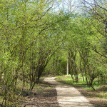 Photo d'un chemin au milieu de la végétation