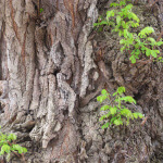 Photo de détail de l'écorce d'une arbre