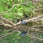 Photo d'un oiseau au bord de la rivière Orne