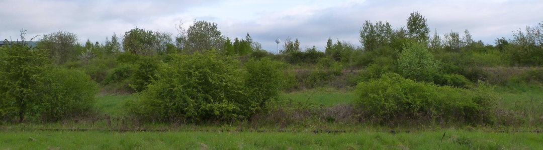 Photo d'un paysage industriel envahit par la végétation