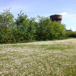 Photo d'un pré fleuri avec en arrière-plan le château d'eau d'une usine